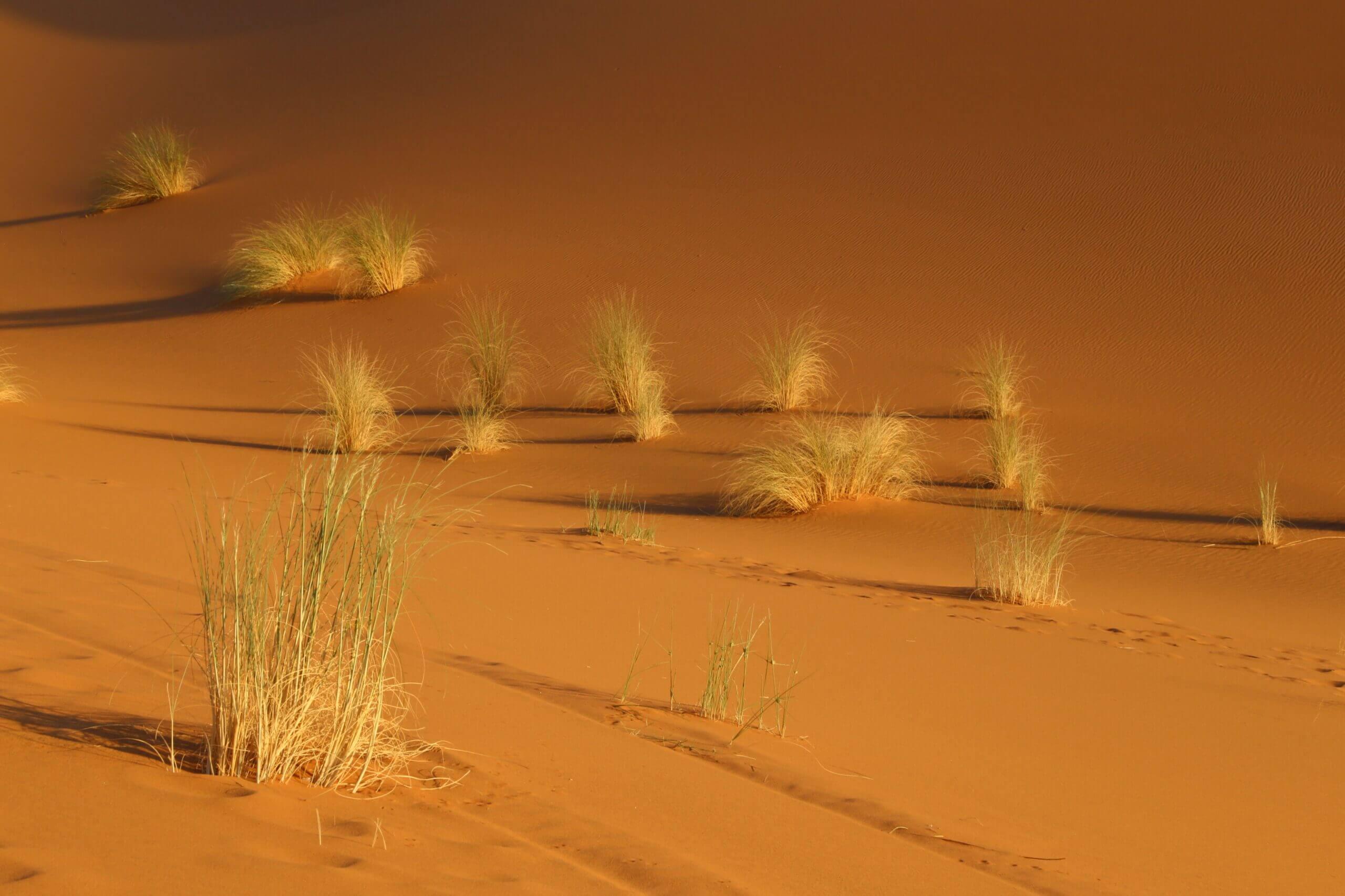 WüsteinGrün